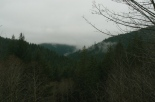 Gales Creek Overlook view
