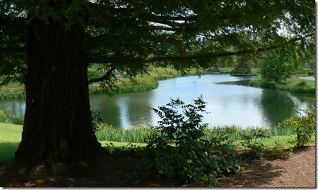 Dawson Creek pond & shade 5-10-12